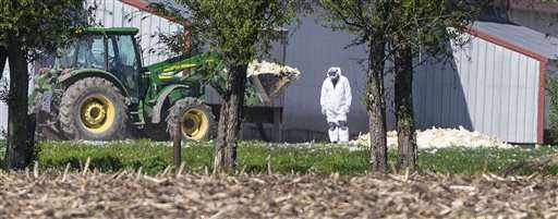 New bird flu cases slow, focus turns to preventing repeat