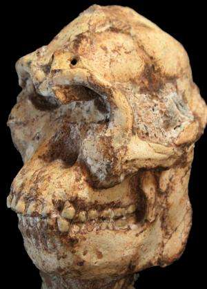 New cosmogenic burial ages for SA's Little Foot fossil and Oldowan artefacts