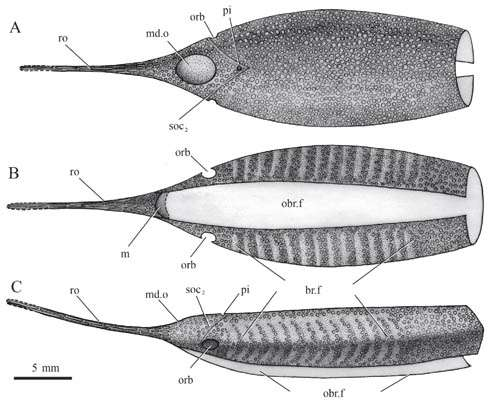 New jawless fish found from the Lower Devonian of Yunnan, China
