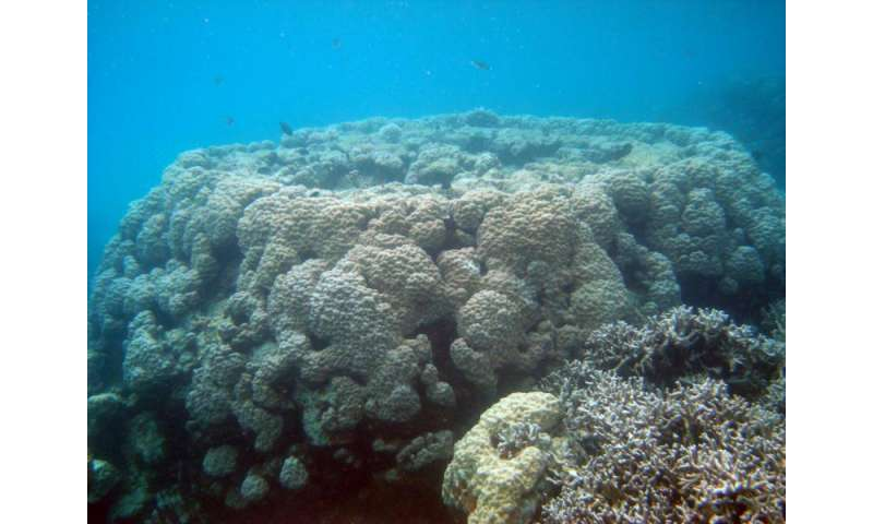 New study from Florida Tech finds Pacific reef growth can match rising sea