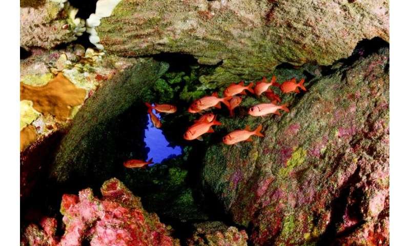 Ocean protection gaining momentum, but still lags progress made on land
