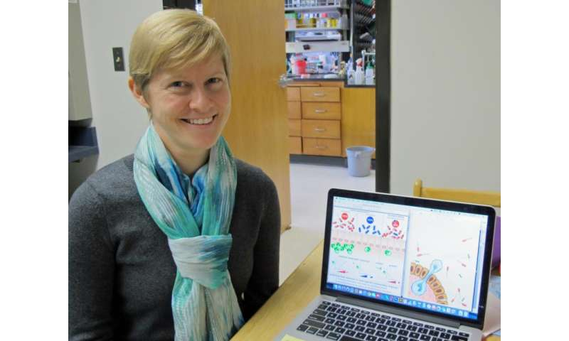 Oregon study suggests some gut microbes may be keystones of health