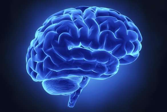 Possible new treatment for neurodegenerative diseases found
