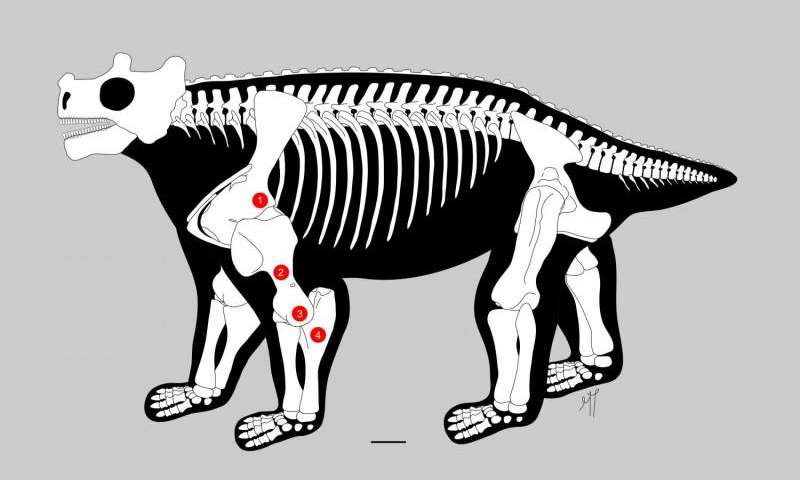 Pre-reptile may be earliest known to walk upright on all fours