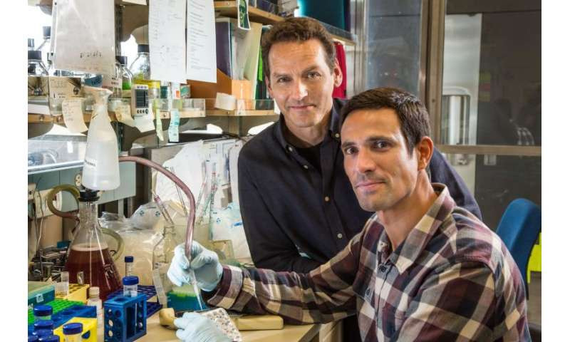 Protein plays unexpected role in embryonic stem cells
