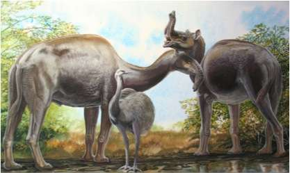 Protein sequencing solves Darwinian mystery of 'strange' South American mammals