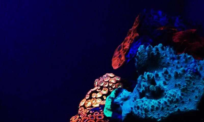 Rainbow of glowing corals discovered in depths of the Red Sea