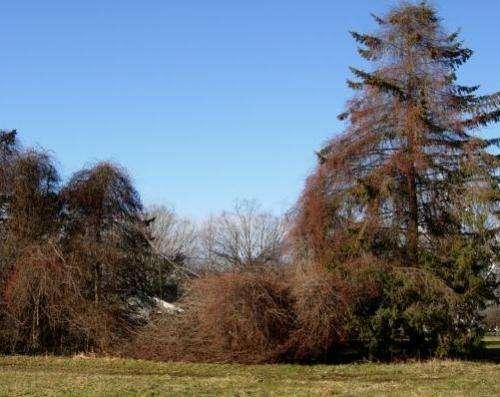 Researchers use new methods to survey native vs. non-native plants