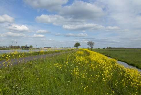 Restoration of species diversity in dike grasslands makes dikes more resistant