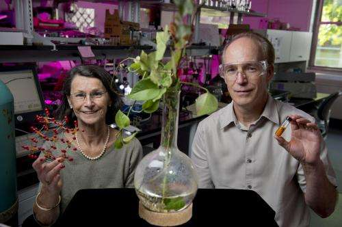 Rutgers University chemistry research holds great promise for advancing sustainable energy