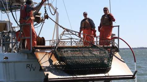 Scientific survey shows modest improvement in blue crab stock