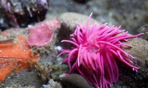Scientists investigate link between skyrocketing sea slug populations and warming seas