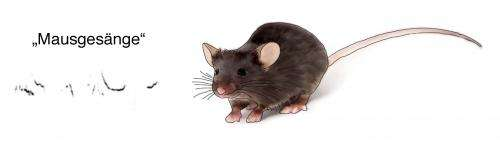 Scientists question the utility of mice to explore the foundations of vocal learning