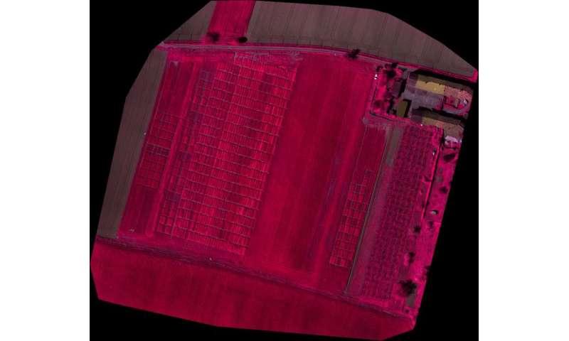 Sensors and drones: hi-tech sentinels for crops