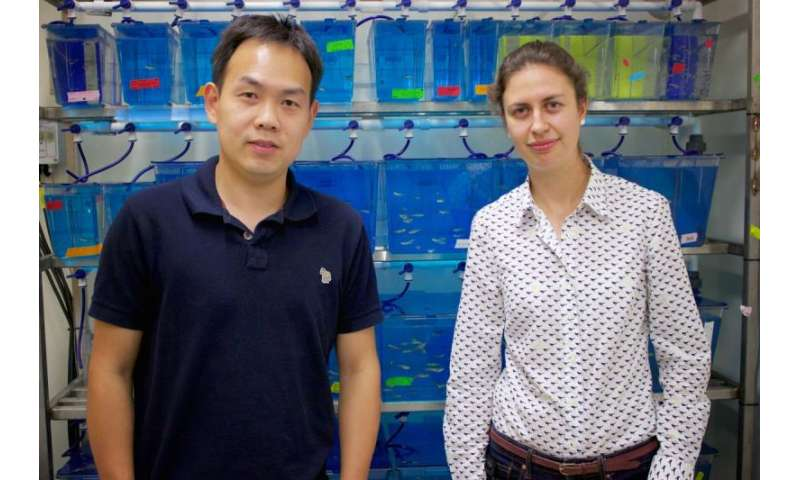 Smaller silver nanoparticles more likely to be absorbed by aquatic life, study finds