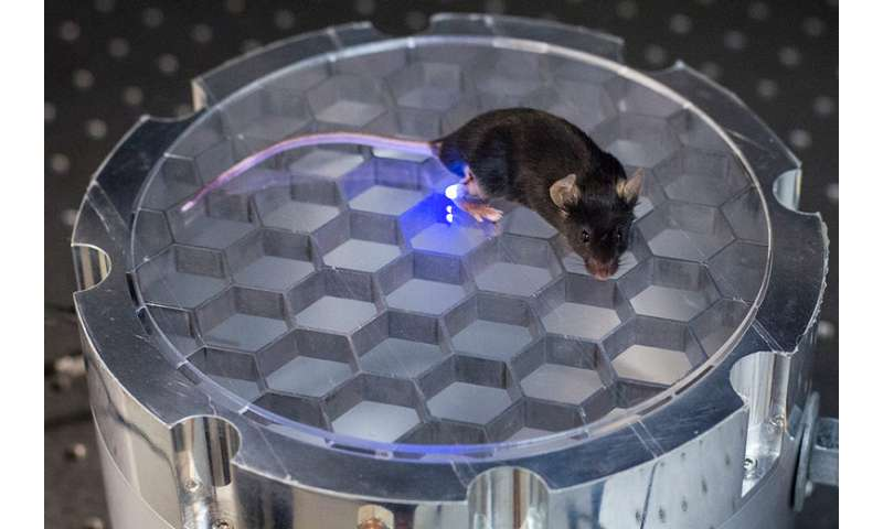 Stanford engineers develop a wireless, implantable device to stimulate nerves in mice