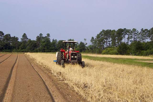 Strip tillage and cover crops enhance soil quality in the southeast in the face of climate change