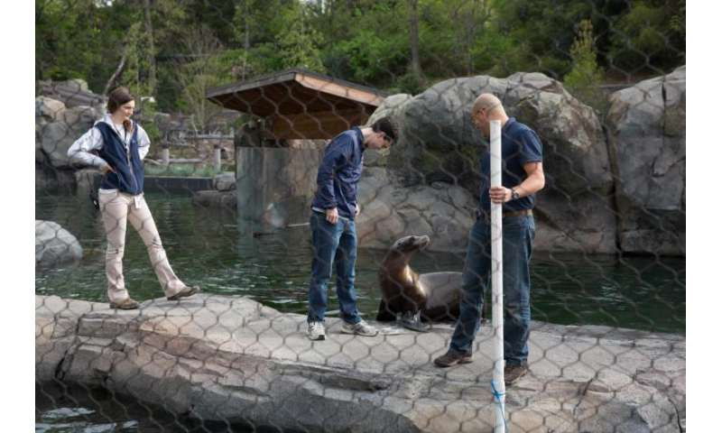 Swimming without a trace -- Building a machine to mimic what sea lions naturally do