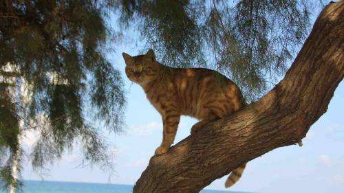 The environmental impact of cats on native wildlife