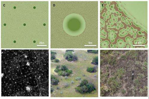 Tiny termites can hold back deserts by creating oases of plant life