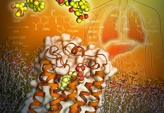 TSRI research leads to 3-D structures of key molecule implicated in diseases of the brain
