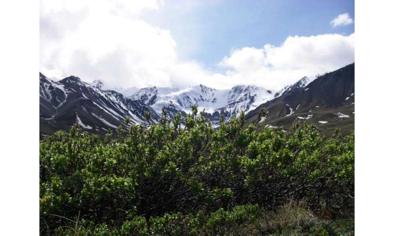 Tundra study uncovers impact of climate warming in the Arctic