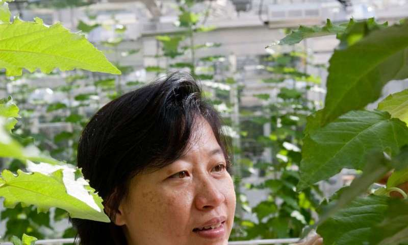 UGA researchers edit plant DNA using mechanism evolved in bacteria