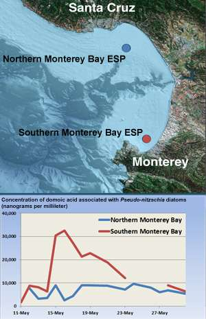 Unusually high concentrations of toxic algae detected in Monterey Bay