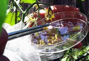Urban pollinators get the job done