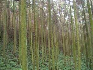 When trees aren't 'green'