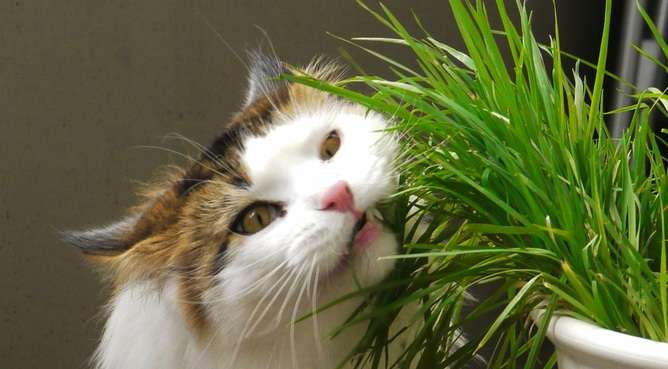 Why cats are fussy eaters but dogs will consume almost anything