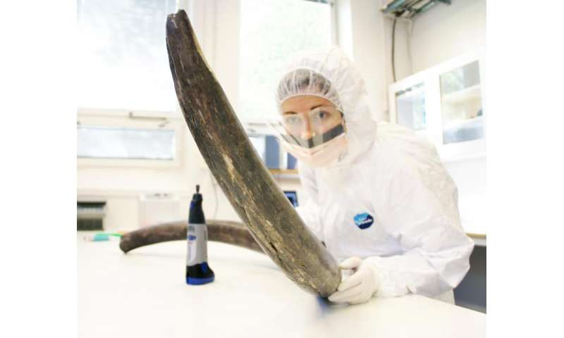Woolly mammoth genomes offer insight into their history and extinction