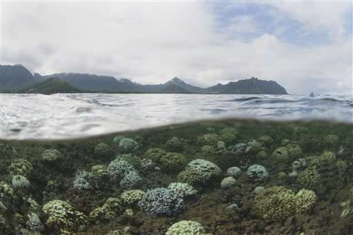 Scientists create 360-degree images of Hawaii coral reefs