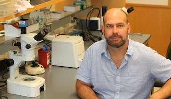 Scientists identify gene that triggers neural remodeling during C. elegans development