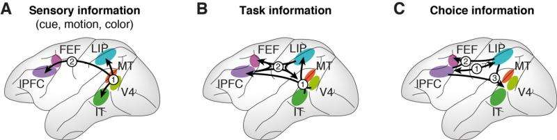 Neuroscientists show that multiple cortical regions are needed to process information