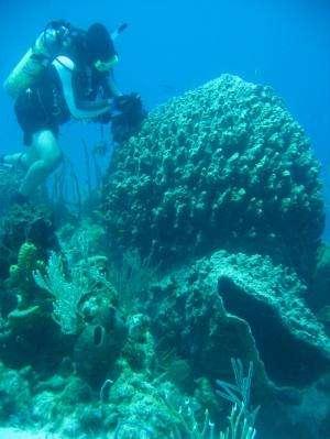 Scientists discover bacteria in marine sponges harvest phosphorus for the reef community