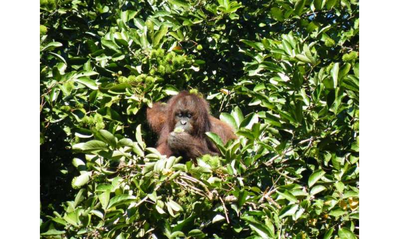 Biodiversity and carbon co-benefits to improve sustainable palm oil