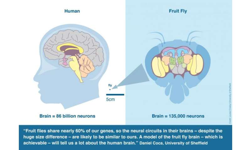 Researchers launch collaborative project to build first complete fly brain model