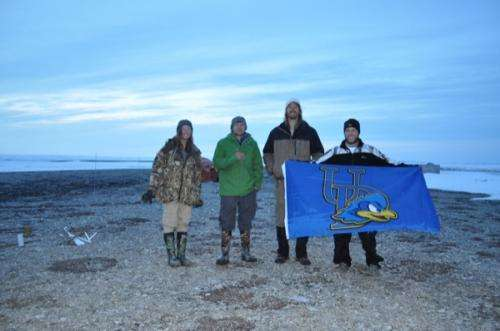 Researchers study Arctic nesting sites of Atlantic brant geese