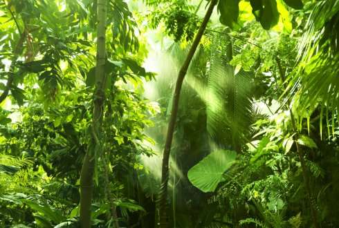 Biodiversity enhances carbon storage of tropical forests