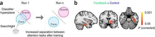 Researchers use closed-loop feedback from the brain to improve attention abilities