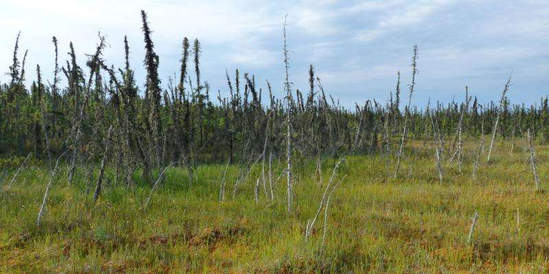 Researchers predict gradual, prolonged release of greenhouse gases from thawing permafrost