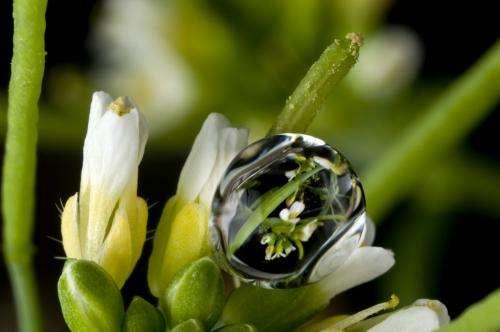 Los científicos descubren por qué las flores florecen antes en un clima cálido