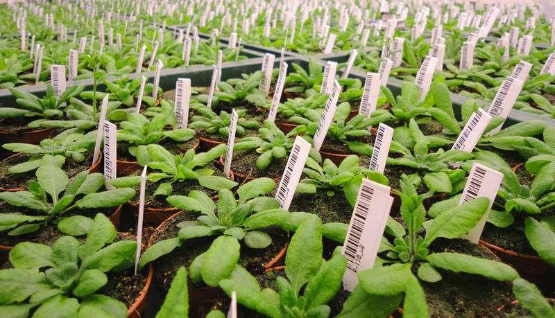 Scientists identify molecular mechanism behind early flowering