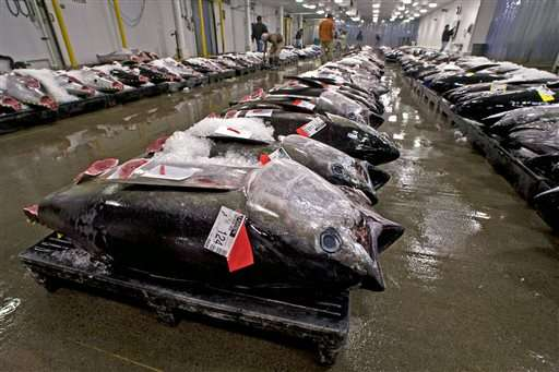 Environmentalists ask court to stop Hawaii tuna quota shift