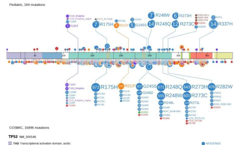Researchers develop powerful interactive tool to mine data from cancer genome