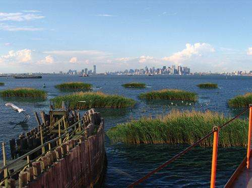 After Hurricane Sandy, climate scientists and architects explore how to co-exist with rising tides