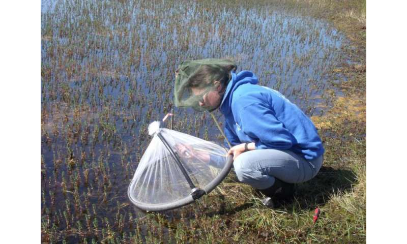Arctic mosquitoes thriving under climate change, Dartmouth study finds