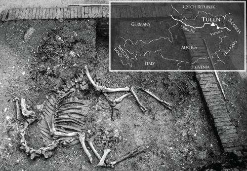 Complete camel skeleton unearthed in Austria