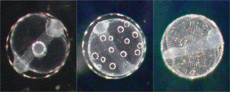 DNA sequencing used to identify thousands of fish eggs